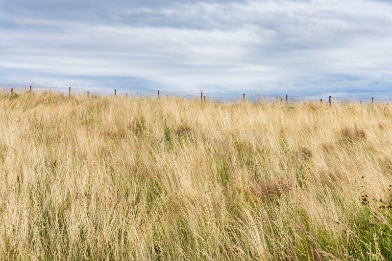 Prairie Grass At Park 2 royalty free stock photo