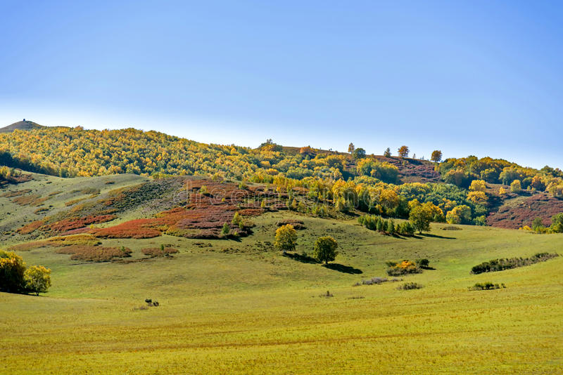 The prairie and hill. Autumn scenery .This photo was taken in five Color mountain ,Bashang Grassland ,Hebei province, china royalty free stock image