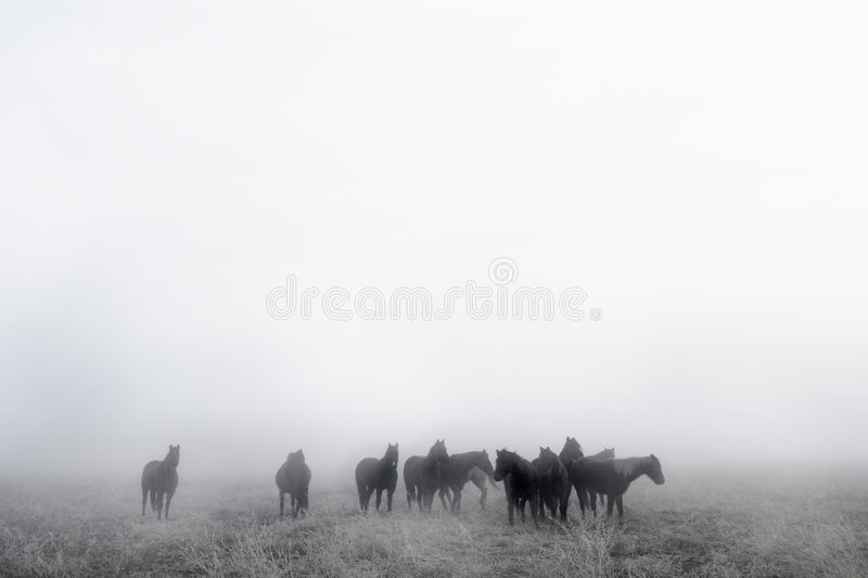 Download Prairie Horses stock photo. Image of foggy, haze, prairie - 457184