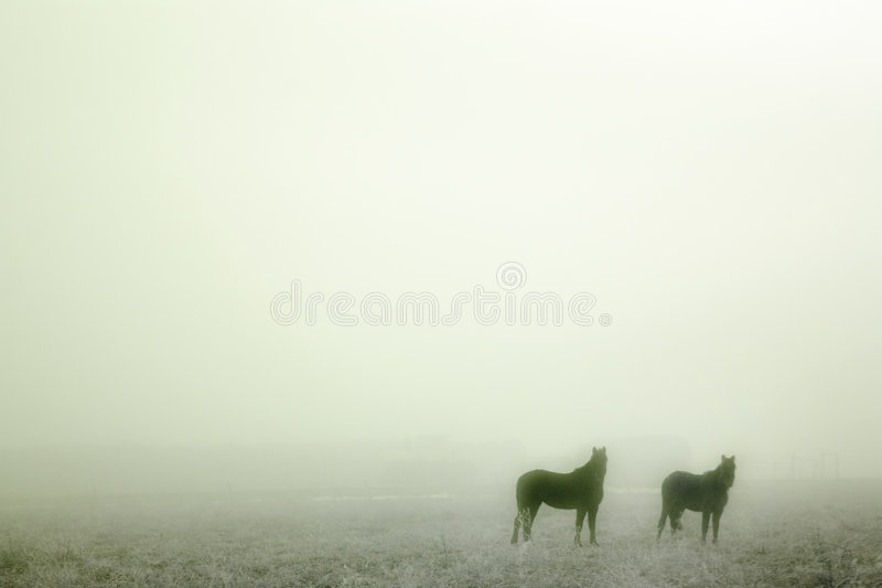 Download Prairie Horses stock image. Image of landscape, mood, dream - 457215
