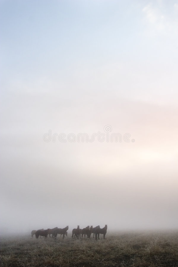 Download Prairie Horses stock image. Image of peace, haunt, rain - 458339