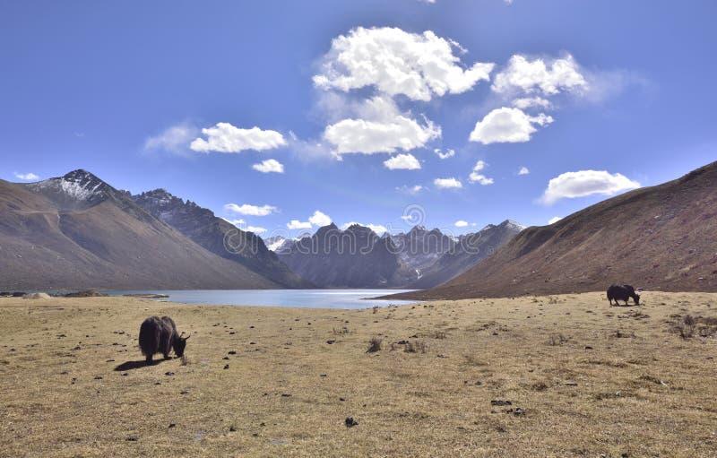 Prairie, lac, paysage de glacier image libre de droits