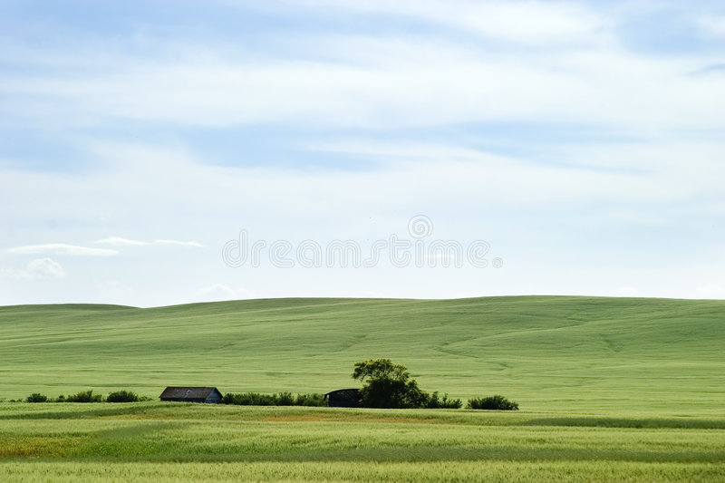 Download Prairie Landscape stock image. Image of barley, blue, farm - 457081