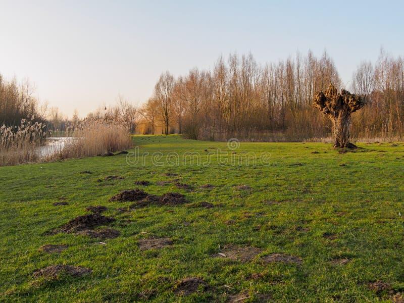 Prairie néerlandaise par le courant au coucher du soleil photos libres de droits