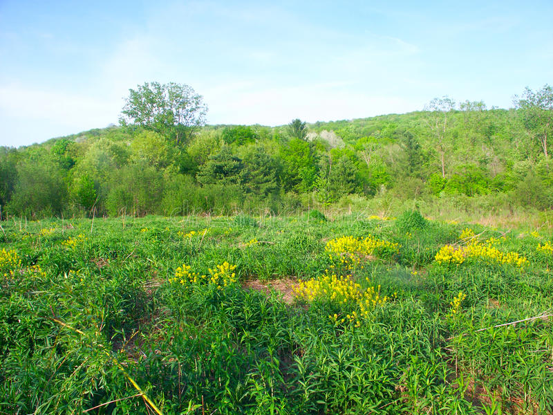 Prairie Scene - Wisconsin. Beautiful prairie in the spring at Baxters Hollow in southern Wisconsin royalty free stock photography