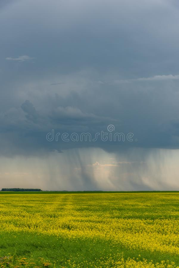 Prairie storms sweep over canola fields. Prairie storms sweep over blooming canola fields in rural Canada. Abandoned tractor in the foreground stock photos