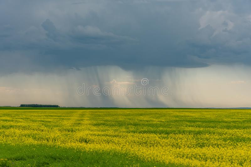 Prairie storms sweep over canola fields. Prairie storms sweep over blooming canola fields in rural Canada. Abandoned tractor in the foreground royalty free stock photography
