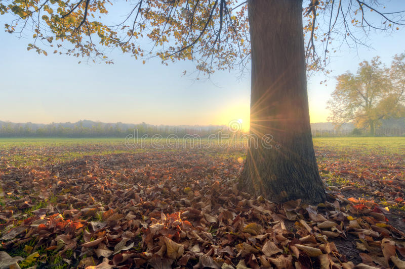 Download Prairie sunrise stock image. Image of fall, autumn, forest - 23880211