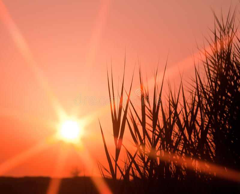 Download Prairie Sunset stock photo. Image of stalk, outdoors - 16230498