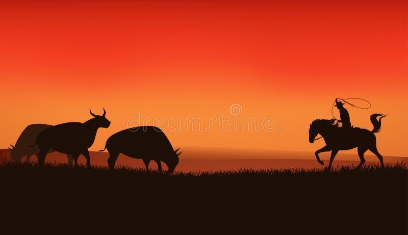 Prairie sunset. Wild west prairie landscape - cowboy chasing the herd of bulls - vector silhouette scene vector illustration