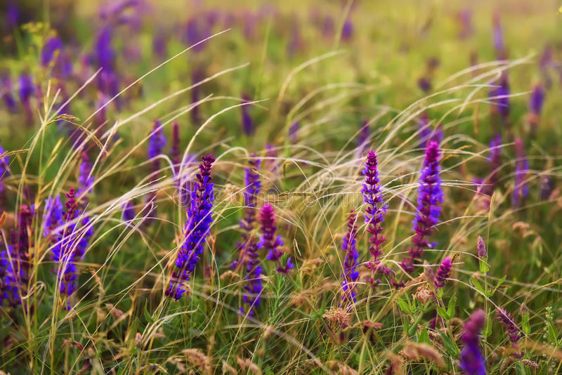 Prairie wild flowers and feather royalty free stock photography