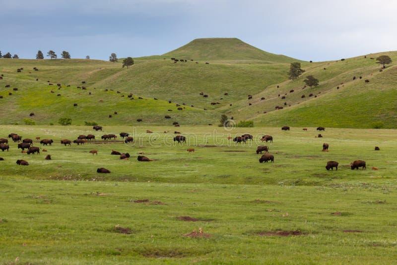 Prairieleven het de Zuid- van Dakota royalty-vrije stock foto's