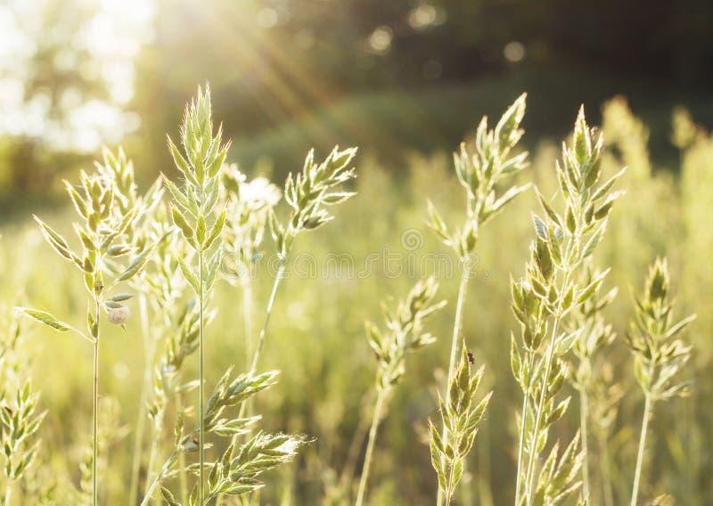 Prairies indigènes et coucher du soleil d'herbe photographie stock libre de droits