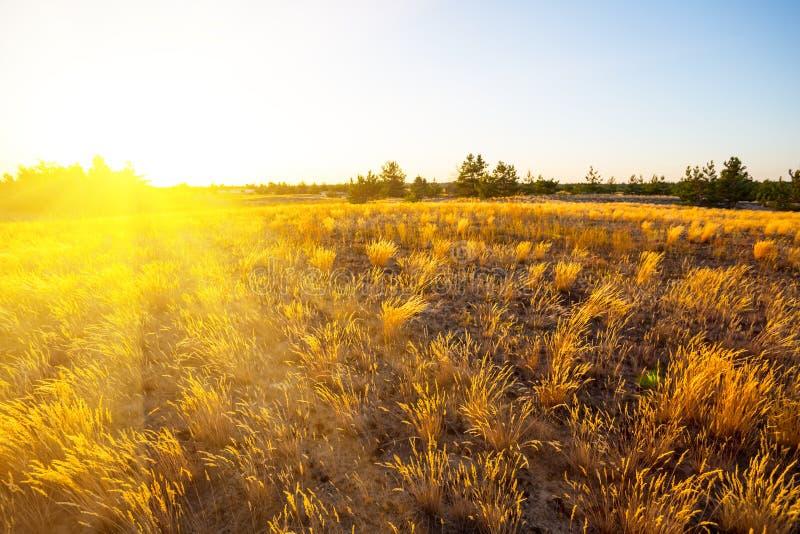 Prairies sablonneuses d'été au coucher du soleil photos stock