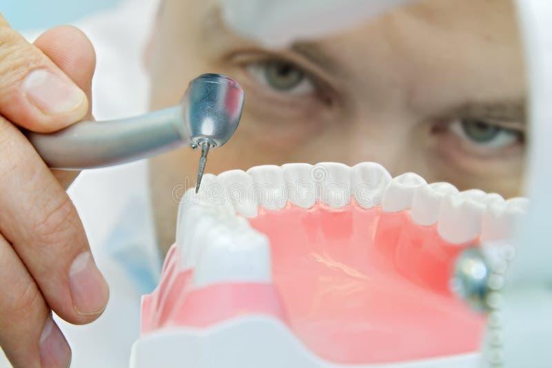 Praktizierender Zahnarzt stockfoto