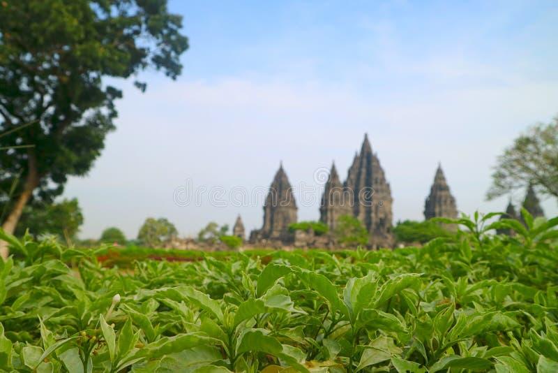 Prambanan Hindu Temple, Bokoharjo, Sleman Regency, Special Region Of Yogyakarta, Indonesia. From garden side stock photo