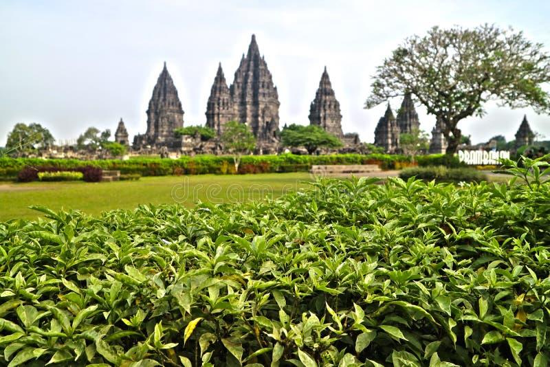 Prambanan Hindu Temple, Bokoharjo, Sleman Regency, Special Region Of Yogyakarta, Indonesia. From park side stock photography