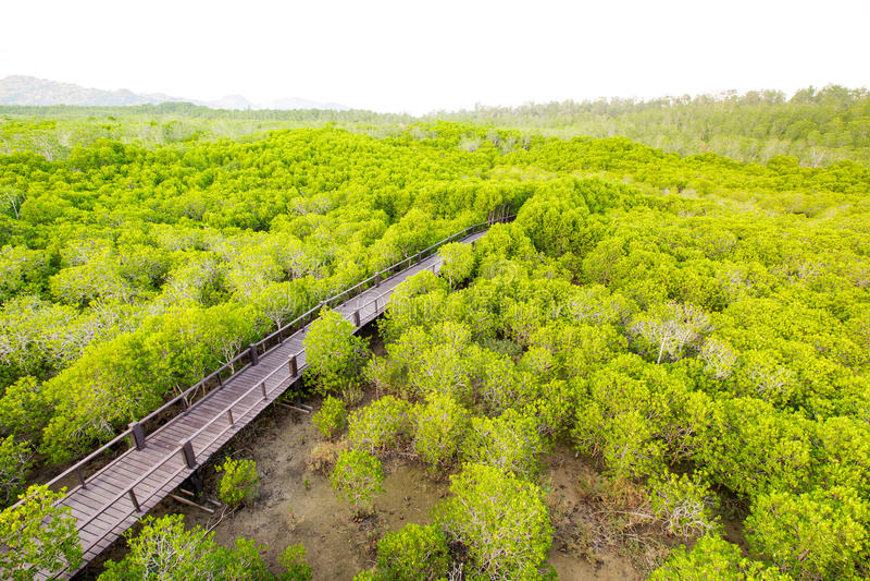 Pranburi森林公园,班武里府,泰国 免版税库存图片