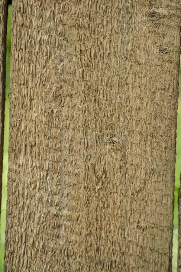 Prancha de madeira não tratada velha com um arranjo horizontal Textura do fundo foto de stock