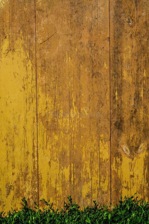 Pranchas pintadas amarelas velhas do Grunge com textura de madeira na grama verde fotografia de stock