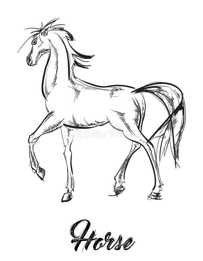 Prancing портрет лошади Эскиз вектора galloping лошади иллюстрация штока