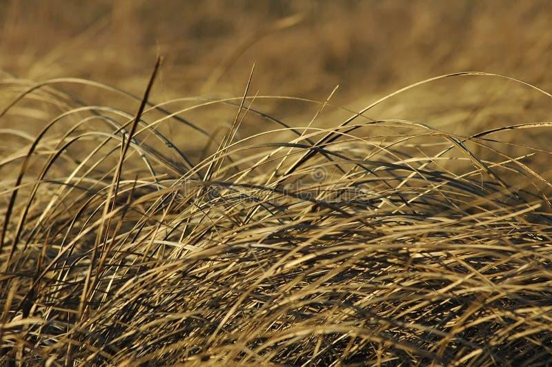 prarie травы стоковые фотографии rf