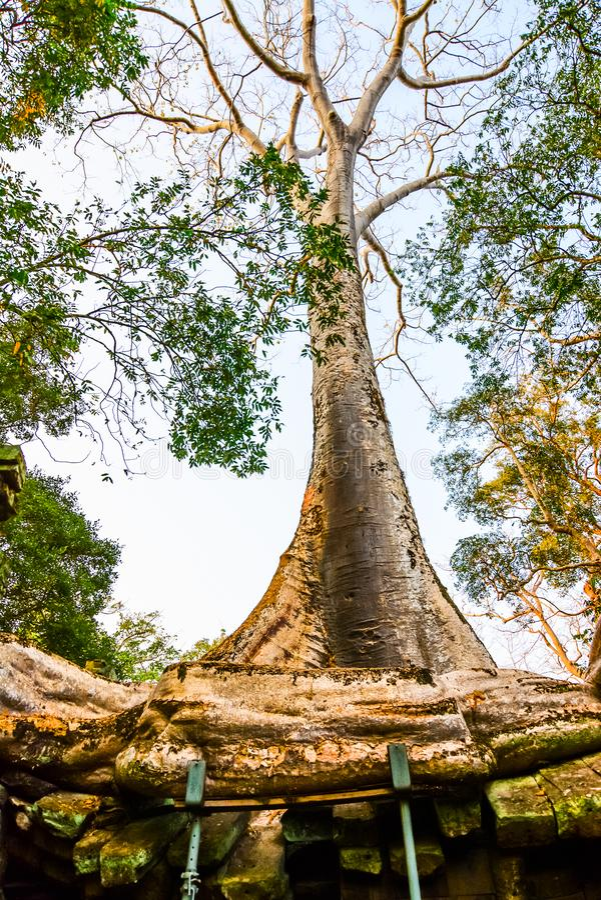 Prasat Ta Phrohm is een steenkasteel tijdens de oude Khmer periode wordt gebouwd die royalty-vrije stock afbeelding