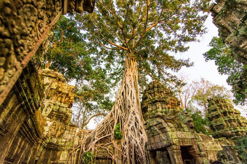 Prasat Ta Phrohm is een steenkasteel tijdens de oude Khmer periode wordt gebouwd die stock foto