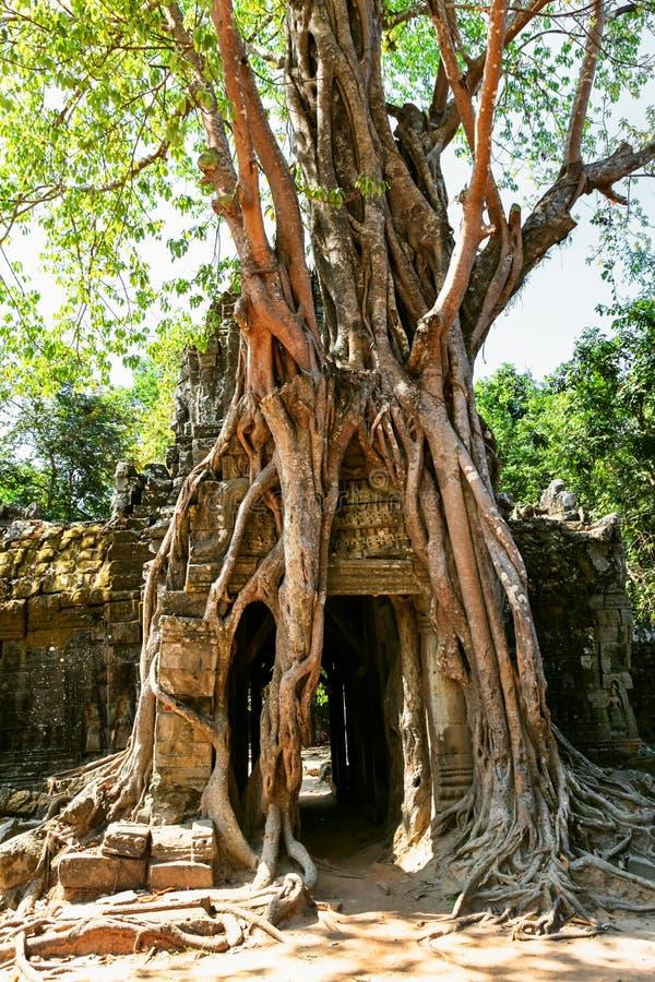 Prasat Ta Prum of de Tempel van Ta Prohm complex, dichtbij Siem oogst, Kambodja royalty-vrije stock afbeelding
