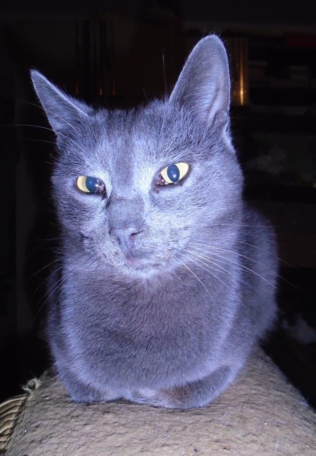 Prateie o gato imagem de stock royalty free