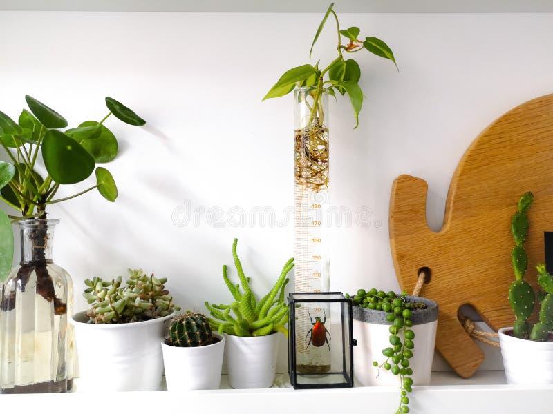 Prateleira branca com as plantas múltiplas das plantas carnudas e arte quadro do inseto da taxidermia de um besouro vermelho colo fotografia de stock royalty free