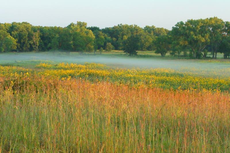 Prateria alta dell'erba, mattina nebbiosa immagini stock
