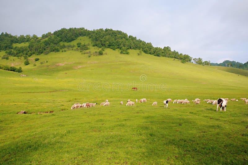 Prateria di Baoji Guan Shan immagini stock libere da diritti