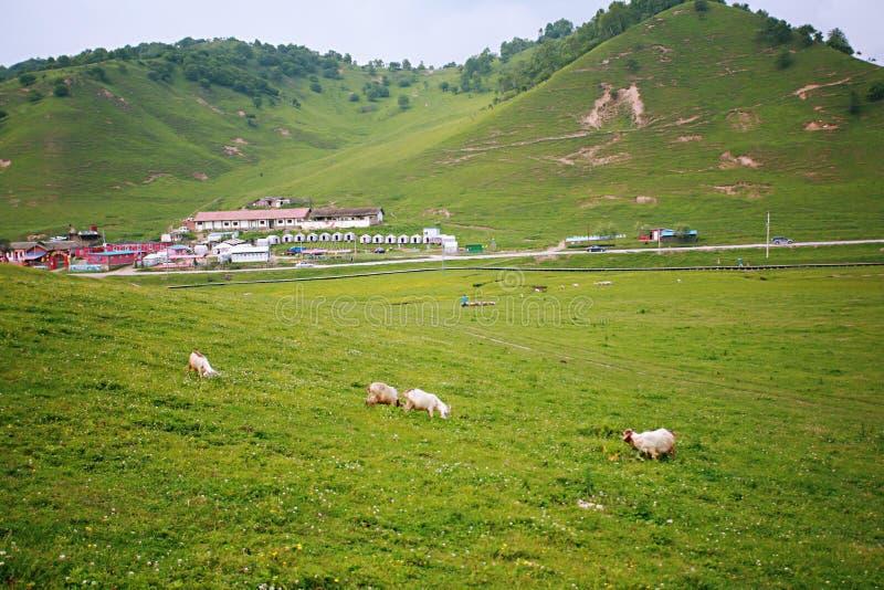 Prateria di Baoji Guan Shan fotografie stock libere da diritti