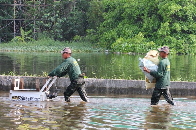 prathumthani Ταϊλάνδη πλημμυρών στοκ φωτογραφία με δικαίωμα ελεύθερης χρήσης