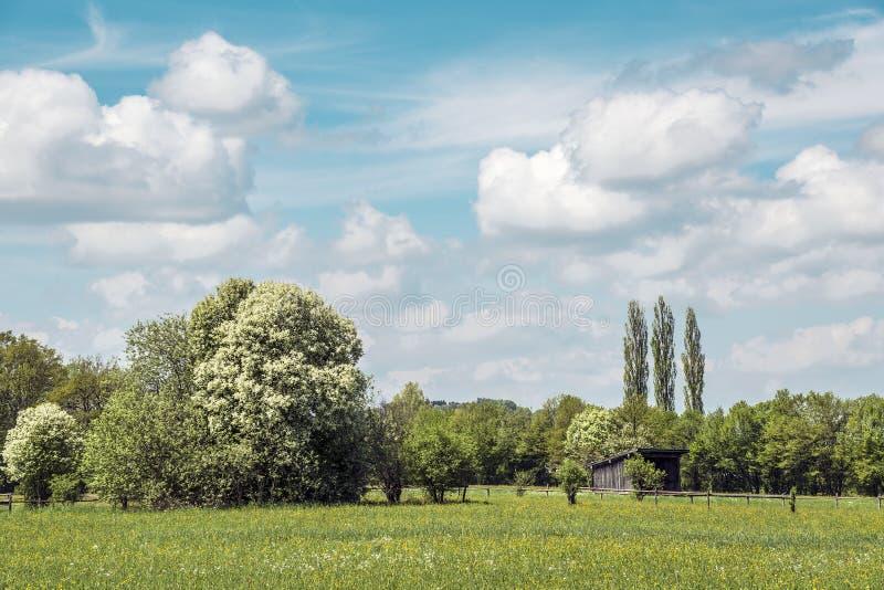 Download Prati con cielo blu fotografia stock. Immagine di autunno - 30827114