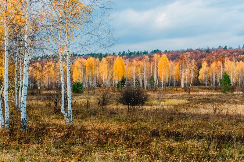 Prati del terreno alluvionale della zona della foresta-steppa immagini stock
