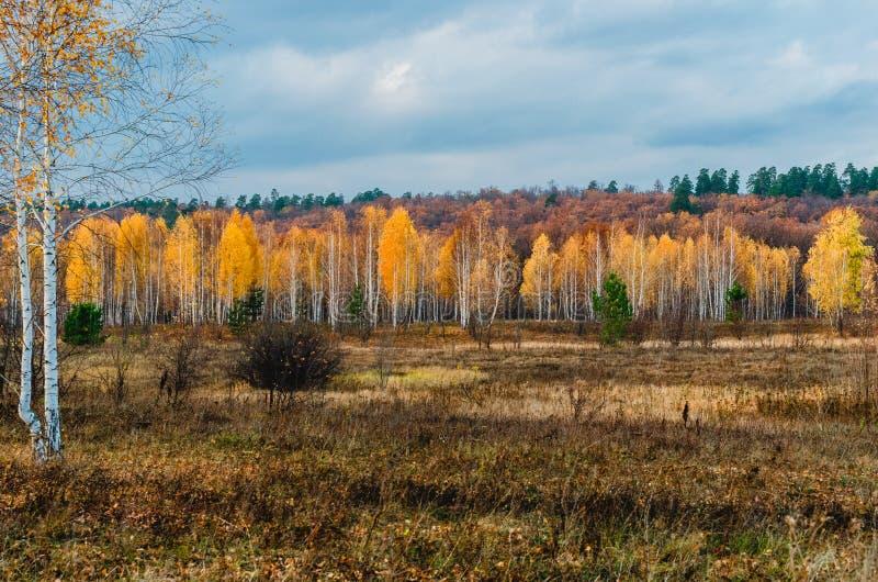 Prati del terreno alluvionale della zona della foresta-steppa immagine stock