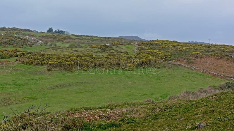 Prati e dfields con shrubson le scogliere sulla costa del Mare del Nord di howth, Irlanda fotografia stock