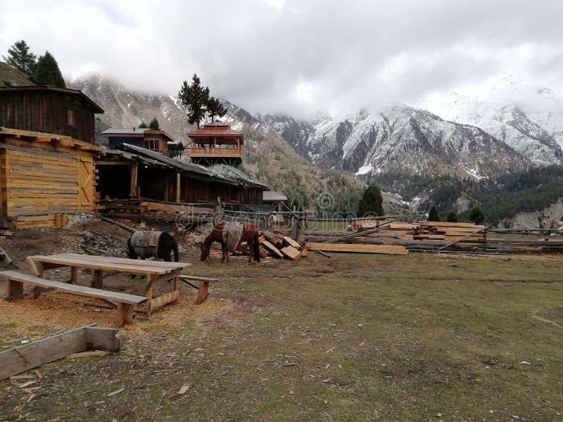 Prati leggiadramente, Gilgit Baltistan, Pakistan immagine stock libera da diritti