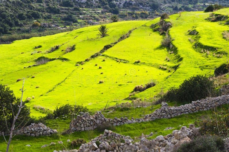 Prati a terrazze verdi fotografia stock. Immagine di sole - 36026382