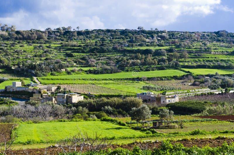 Prati A Terrazze Verdi, Malta Fotografia Stock - Immagine di collina ...