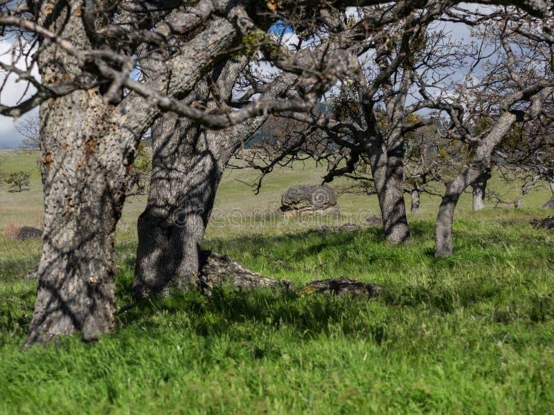 Prati verdi sulle montagne con le querce immagini stock