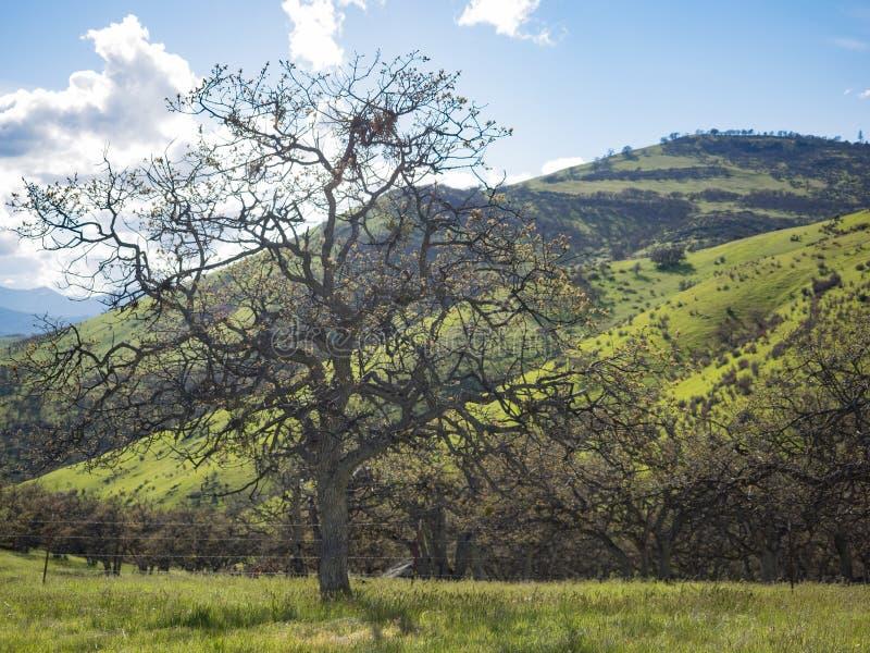 Prati verdi sulle montagne con le querce fotografie stock libere da diritti