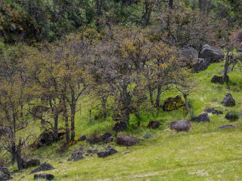 Prati verdi sulle montagne con le querce immagine stock libera da diritti
