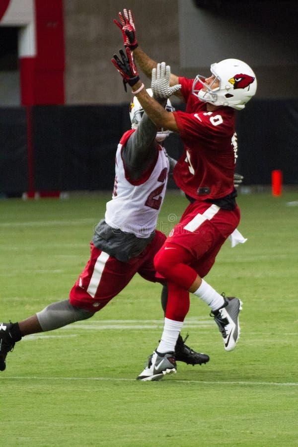 Pratica del campo di addestramento di Pre-stagione di calcio di Arizona Cardinals del NFL fotografie stock libere da diritti