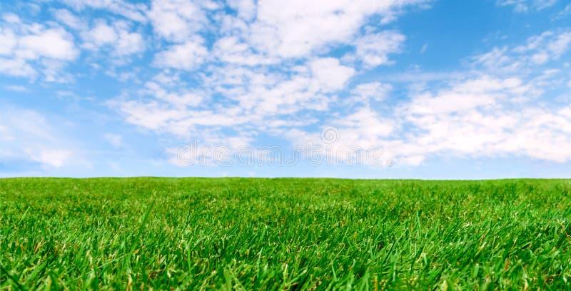 Prato agricolo della primavera immagine stock