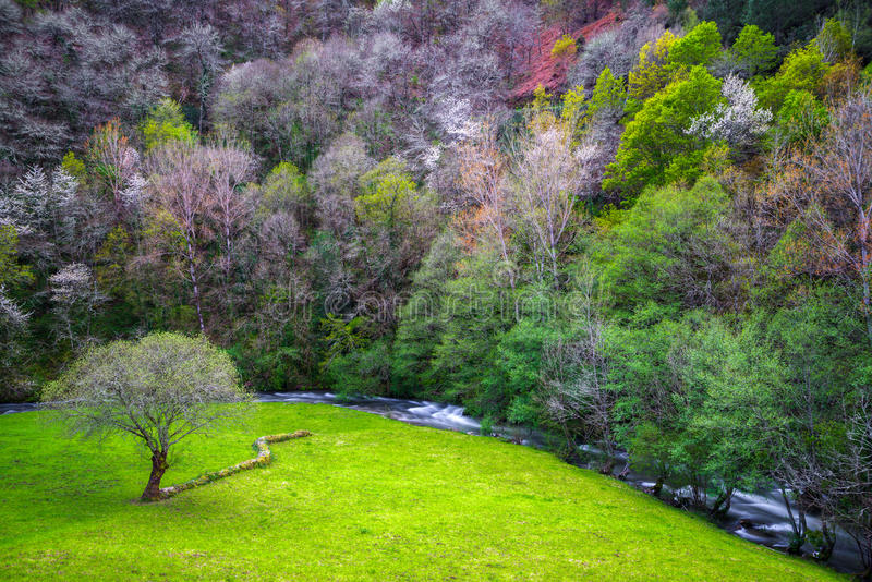 Prato, albero e parete di pietra immagine stock libera da diritti