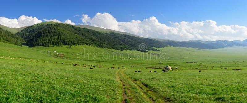 Prato alpino al plateau del Asy fotografia stock
