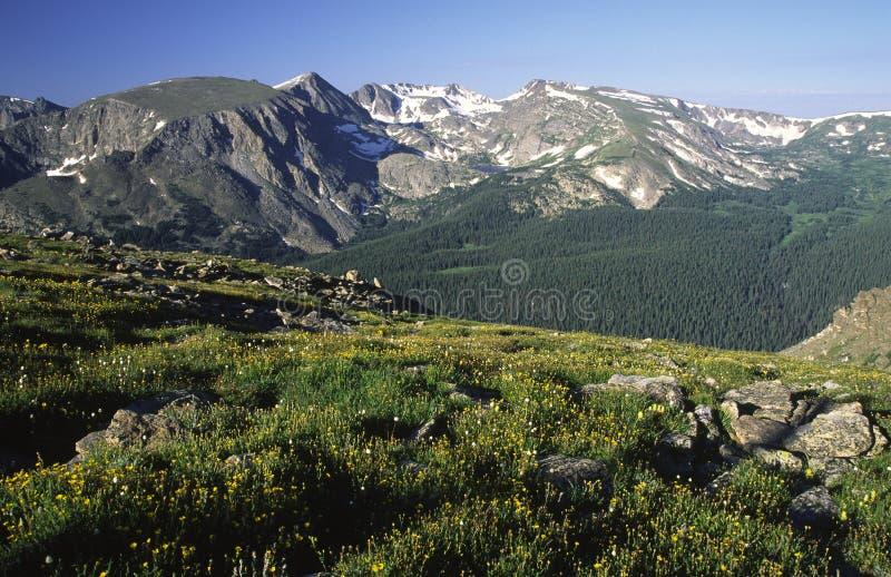 Prato alpino alla strada del Ridge della traccia in Colorado fotografie stock